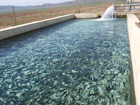 شناسایی 100 هزار هکتار پهنه آبی سواحل مکران برای پرورش آبزیان در قفس